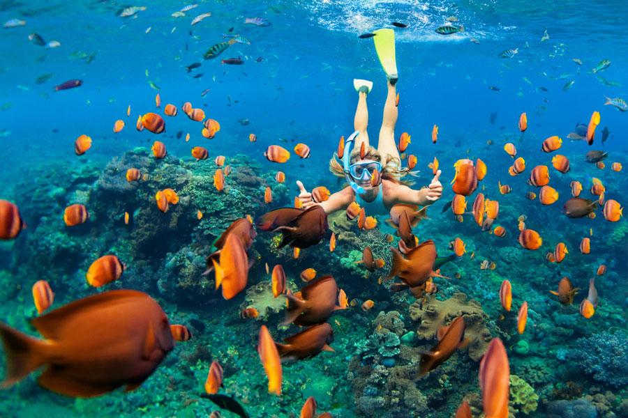 210 snorkeling